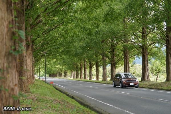 マキノ高原・メタセコイア並木でMINIクロスオーバー撮影