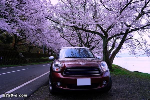 MINIクロスオーバーで桜ドライブ‐湖の畔で見つけた撮影スポット