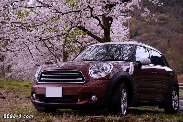 MINIクロスオーバーで桜ドライブ