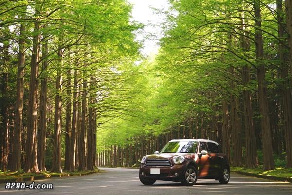 メタセコイア並木を新緑ドライブ