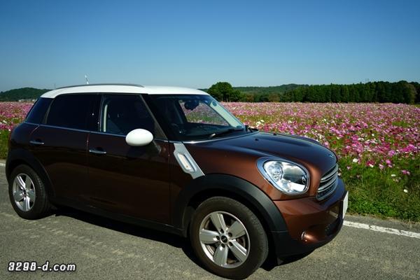 MINIクロスオーバーで田舎道を走行していると、突然目の前に広がった満開のコスモス畑に急停車