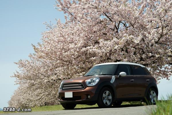 青空の下、満開の桜とMINIクロスオーバー