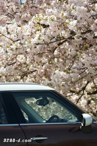 長距離ドライブでお疲れなMINIクロスオーバーもしっかりお花見