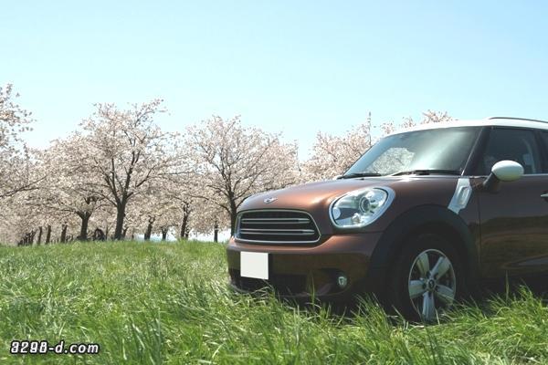 青空の下、満開の桜並木とMINIクロスオーバー